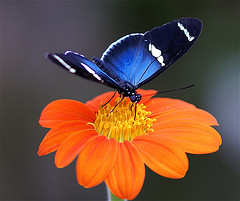 Butterfly emerged from cacoon