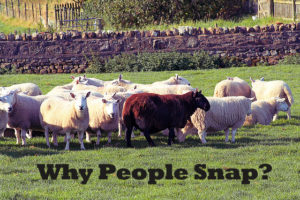 Why People Snap?